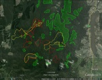 Mapped 'old growth forest' (dark geen shading) in the southern Strathbogie State Forest (Source: DEPI)