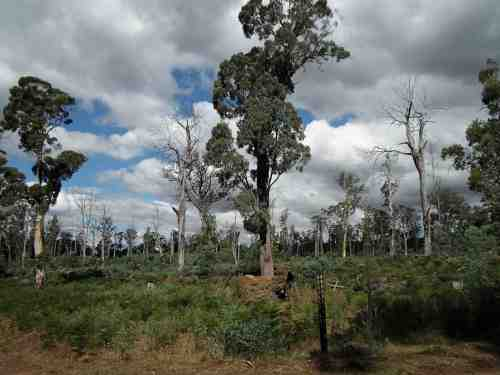 Failed VicForests coup