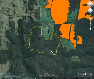 The Tames Rd burn and arrow marking where old growth trees were decimated. Orange areas are pine plantations.