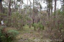 Unburnt forest along T4.