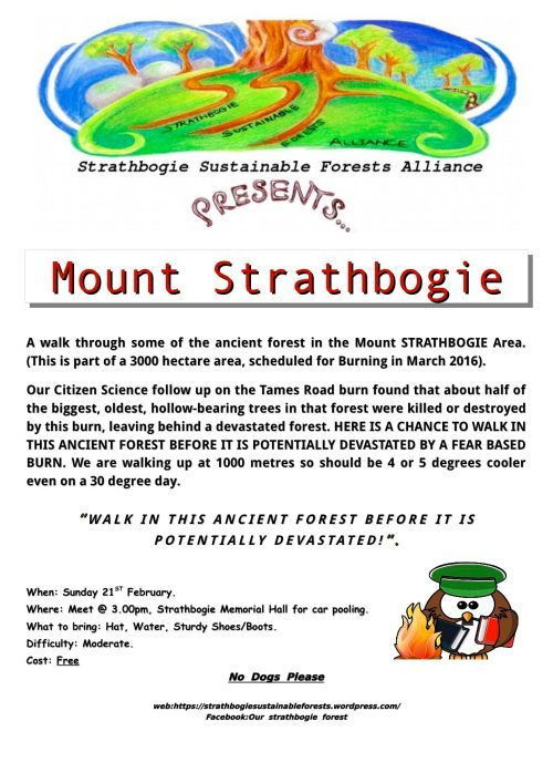 Mt Strathbogie walk Feb 2016