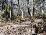 Much of this forest is open, with low fuel loads and poses minimal fire risk.