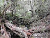 The creek tumbles over boulders and under fallen trees.