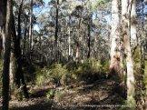 Fungi habitat along Parlours Tk 1