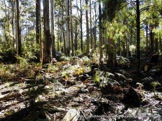 Parlour's coupe habitat.
