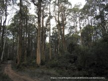 Parlour's coupe habitat - spot the Koala or find the scat!