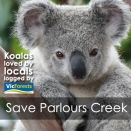 koalas-loved-by-locals