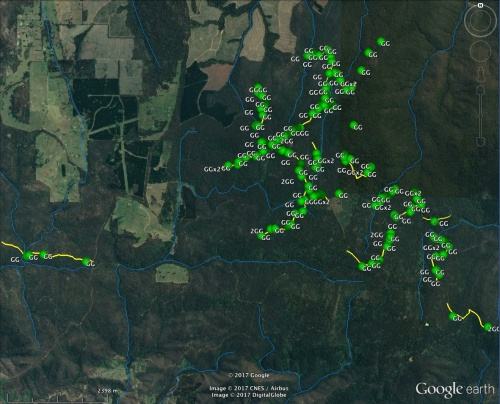SSFG Greater Glider detections from 27 km of transect survey.