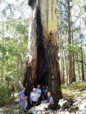 Tree people DSCN0875