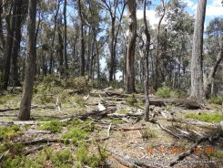 Dry forest on the ridge with open, heathy understorey and great habitat of fallen timber