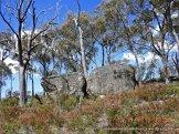 Granite tors in heathland