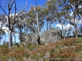 Granite tors above the heath
