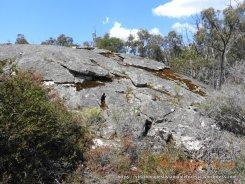Exfoliating granite - rich reptile habitat