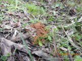 And even Echidnas leave a calling card.