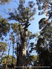 More high-rise habitat in this Mountain Gum