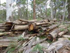 Firewood-quality timber left to rot at the coupe.