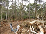 Vicforests' 'world's best practice' threatened species management