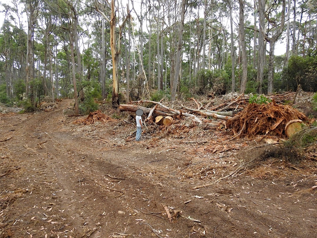 Greater Glider Habitat And Local Jobs Exported To China